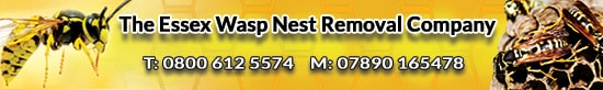 The Essex Wasp Nest Removal Company