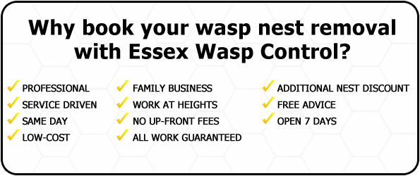 Wasp Nest Removal Sewards End